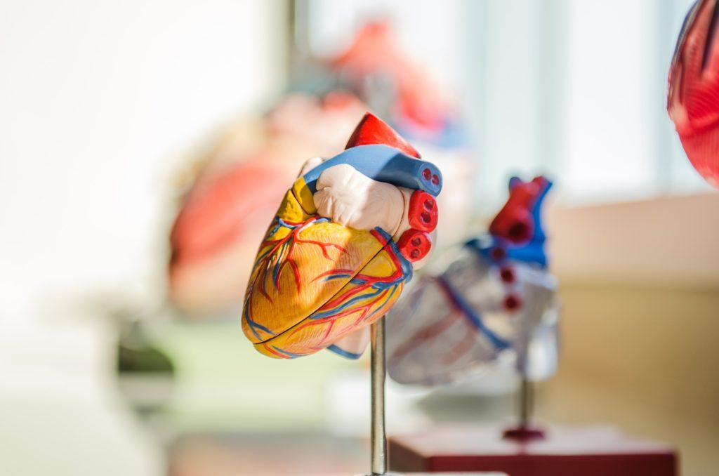 Hart en bloedvaten bij de overgang - Promensil bij overgangsklachten